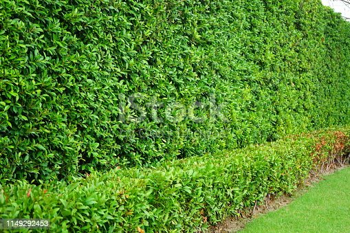 639809128 istock photo Garden with flowerpot stand with asia 1149292453