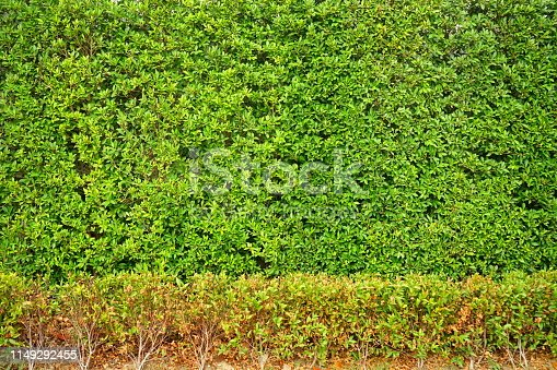 639809128 istock photo Garden with flowerpot stand with asia 1149292455
