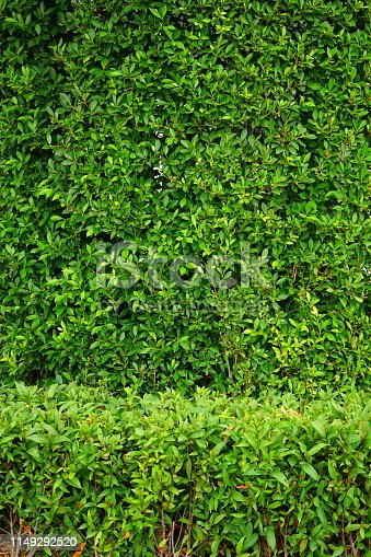 639809128 istock photo Garden with flowerpot stand with asia 1149292520
