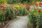 Garden with footpath through flowerbeds of dahlia. Shallow DOF with selective focus on background.