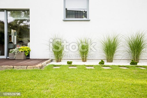 istock Garden with green grass and four bushes next to a house 1026529796