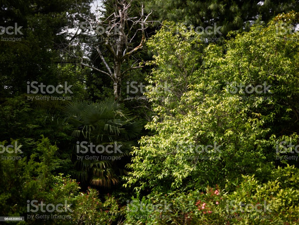 Garden with green plants royalty-free stock photo