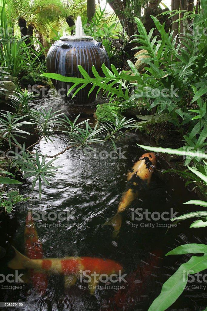 garden with kois pond stock photo