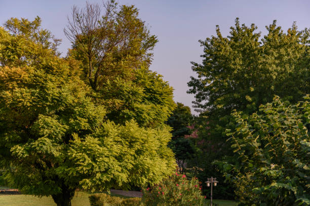 Garden with tall trees in the medieval village of Borghetto sul Mincio, Verona (Italy). stock photo