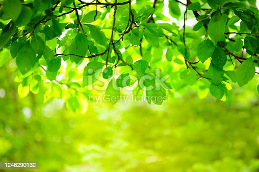garden with trees, nature background