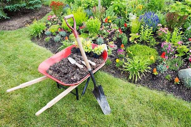 garden work being done landscaping a flowerbed - kruiwagen met gereedschap stockfoto's en -beelden
