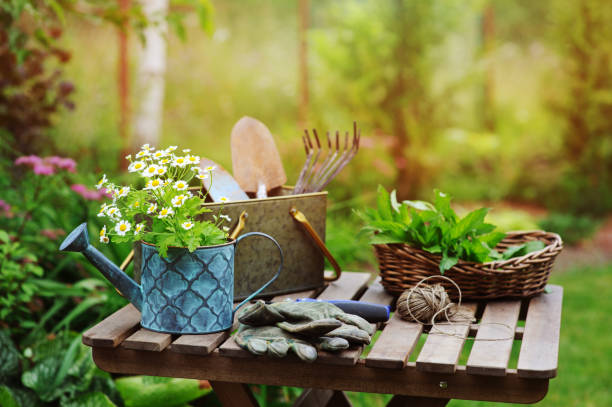 garden work still life in summer. camomile flowers, gloves and toold on wooden table outdoor in sunny day with flowers blooming on background. - june stock photos and pictures