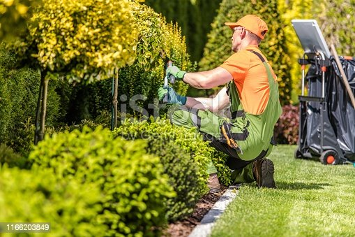 Caucasian Garden Worker in His 30s Trimming Plants Using Large Scissors.