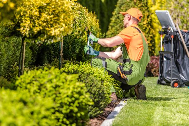 Garden Worker Trimming Plants Caucasian Garden Worker in His 30s Trimming Plants Using Large Scissors. grounds stock pictures, royalty-free photos & images