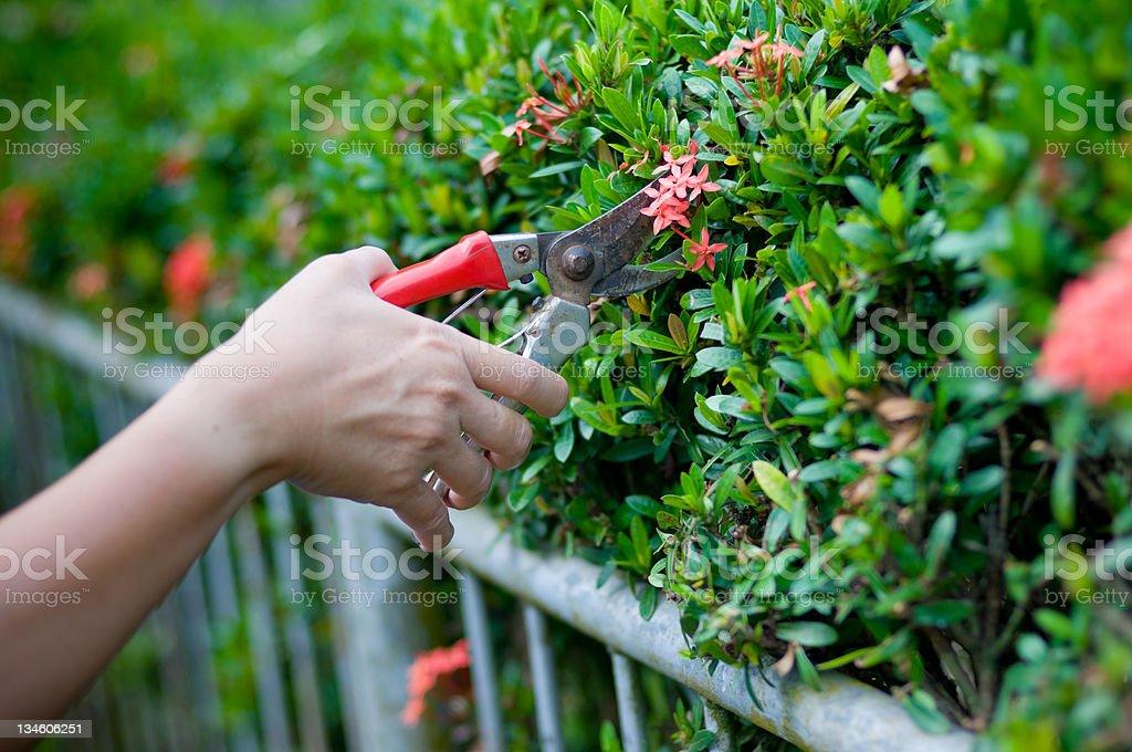 Garden working stock photo