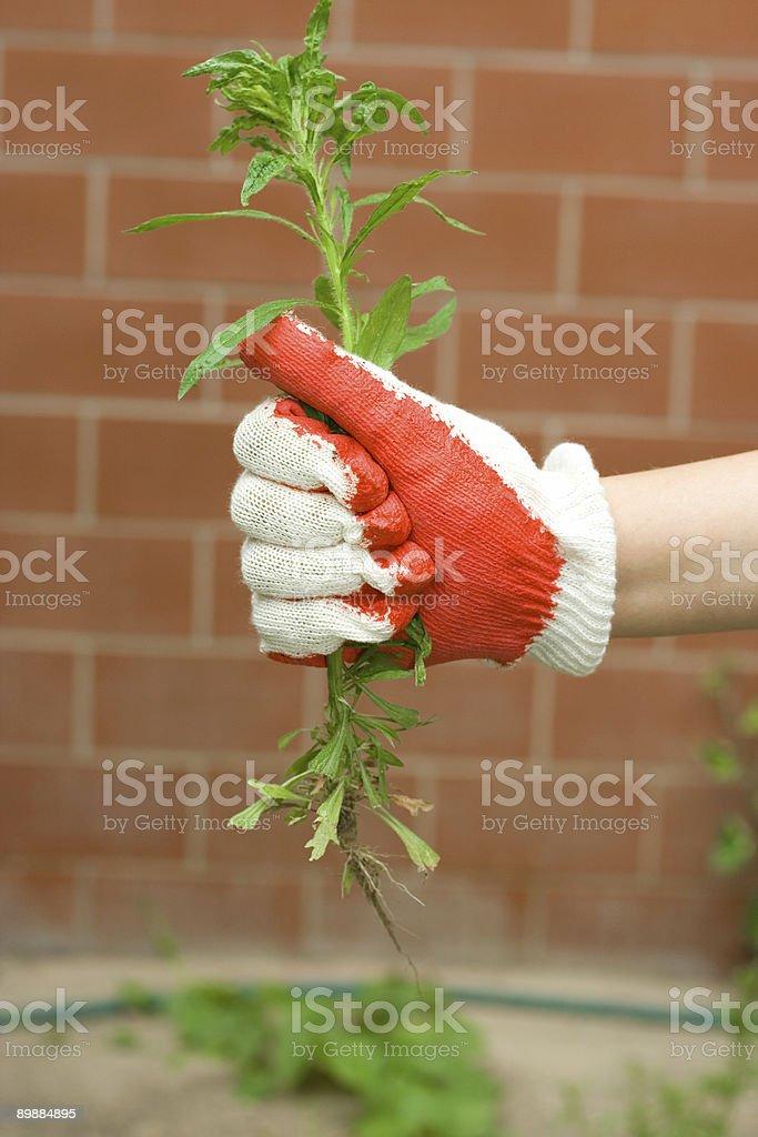 Garten Arbeiten Lizenzfreies stock-foto