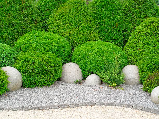 Gardendesign with buxus and yew stock photo