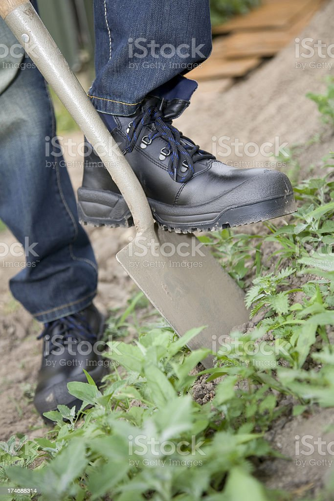 Gardener and work boots with steel toe. royalty-free stock photo