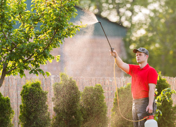Gardener applying an insecticide fertilizer to his fruit shrubs, using a sprayer Gardener applying an insecticide fertilizer to his fruit shrubs, using a sprayer crop sprayer stock pictures, royalty-free photos & images