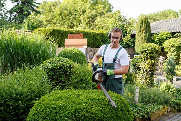 ogrodnik w ogrodnictwo - ciąć zdjęcia i obrazy z banku zdjęć