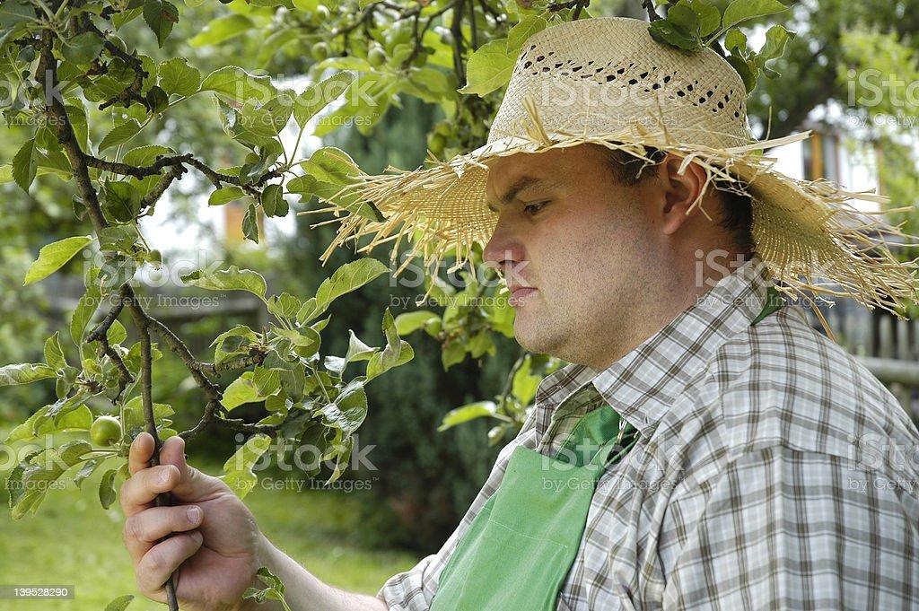 gardener: checking 2 royalty-free stock photo