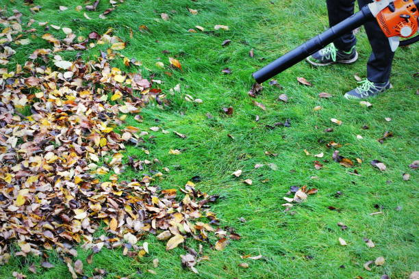 Gardener clearing up the leaves using a leaf blower tool stock photo