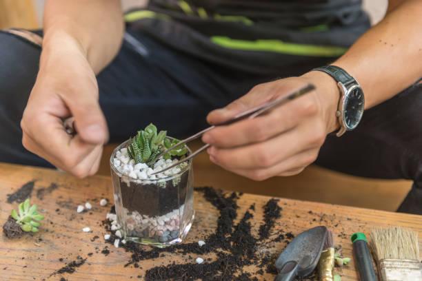 gärtner schmücken die sukkulenten pflanzen auf dem glas mit weißem kies - terrarienpflanzen stock-fotos und bilder