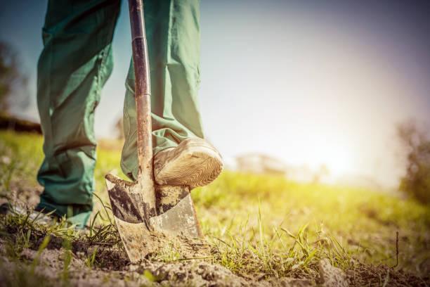 tuinman graven in een tuin met een schop. - graven stockfoto's en -beelden