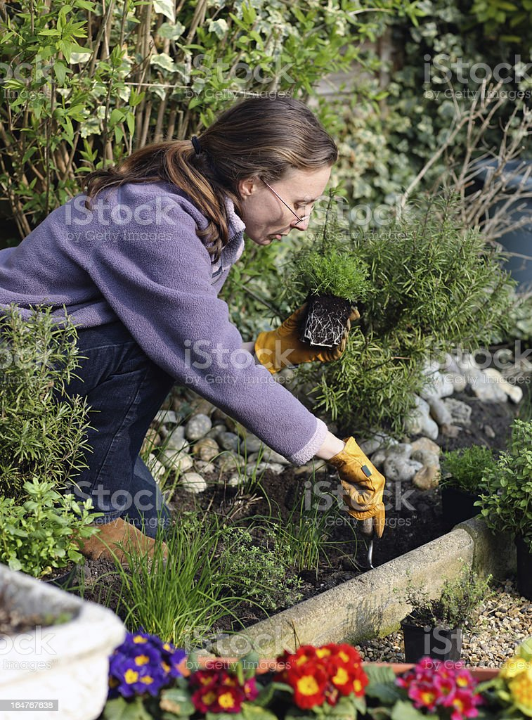Gardener digging in garden royalty-free stock photo