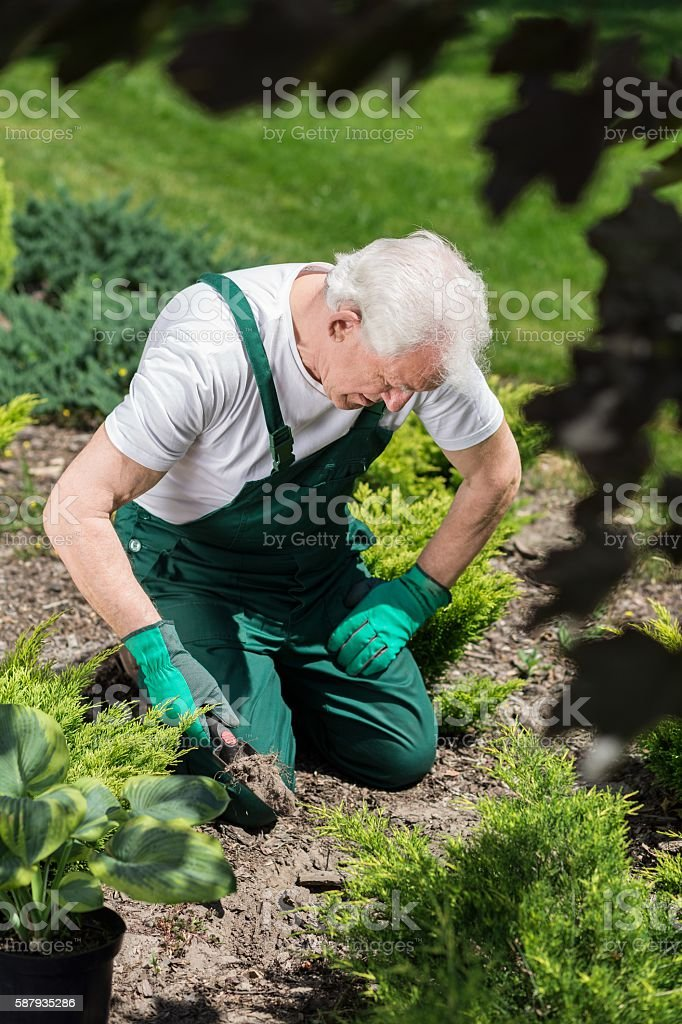 Gardener digging in the ground stock photo