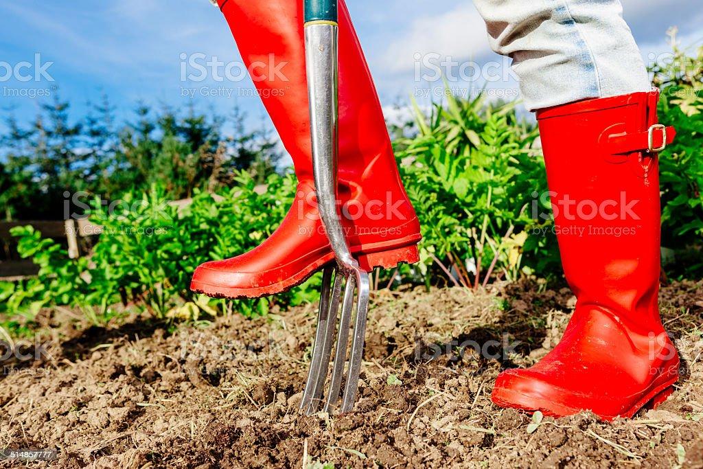 Gardener digging over vegetable garden stock photo