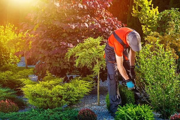 giardiniere lavora in giardino - giardinaggio foto e immagini stock