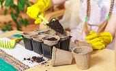 istock Gardener girl. The process of planting seedlings in peat pots. 1299396416