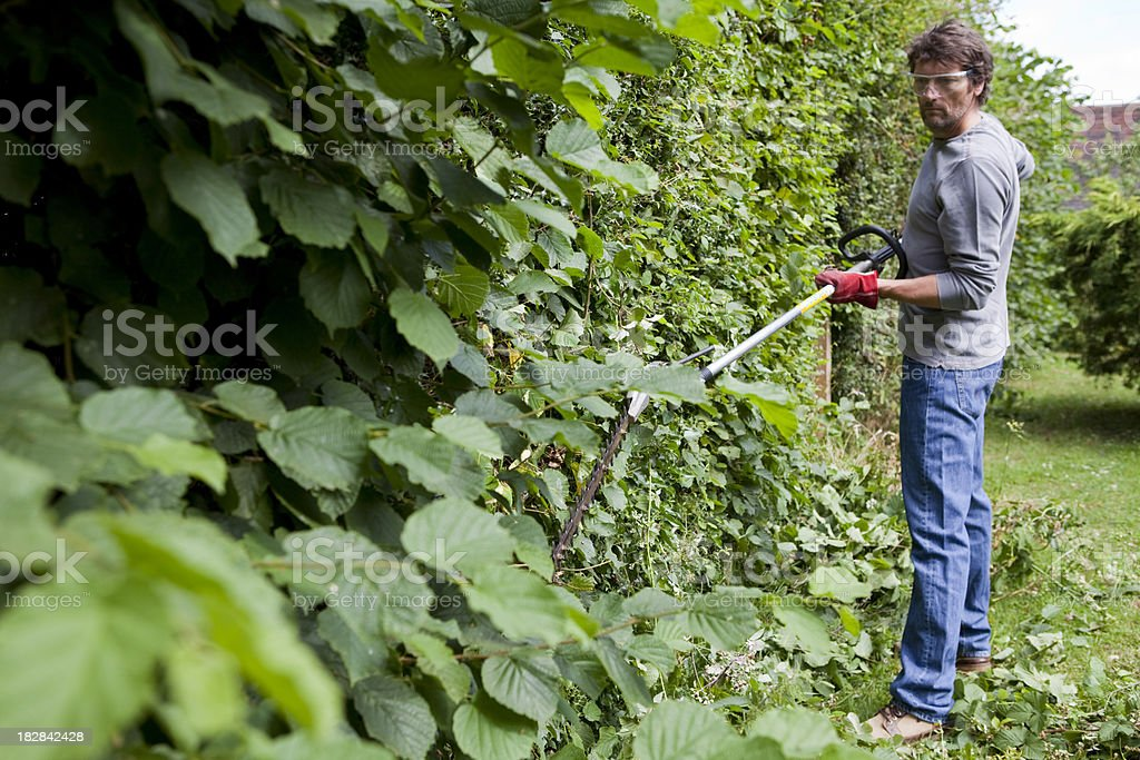 Gardener Hedge Cutting with Petrol Trimmer royalty-free stock photo