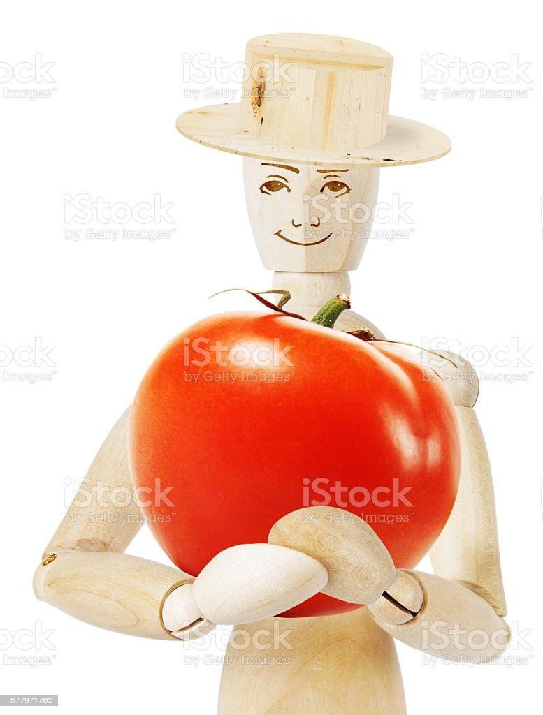 Gardener holds a huge ripe tomato - foto de acervo