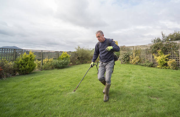 Gardener horticulturalist spraying weed killer on lawn - garden maintenance Gardener horticulturalist spraying weed killer on lawn - garden maintenance herbicide stock pictures, royalty-free photos & images