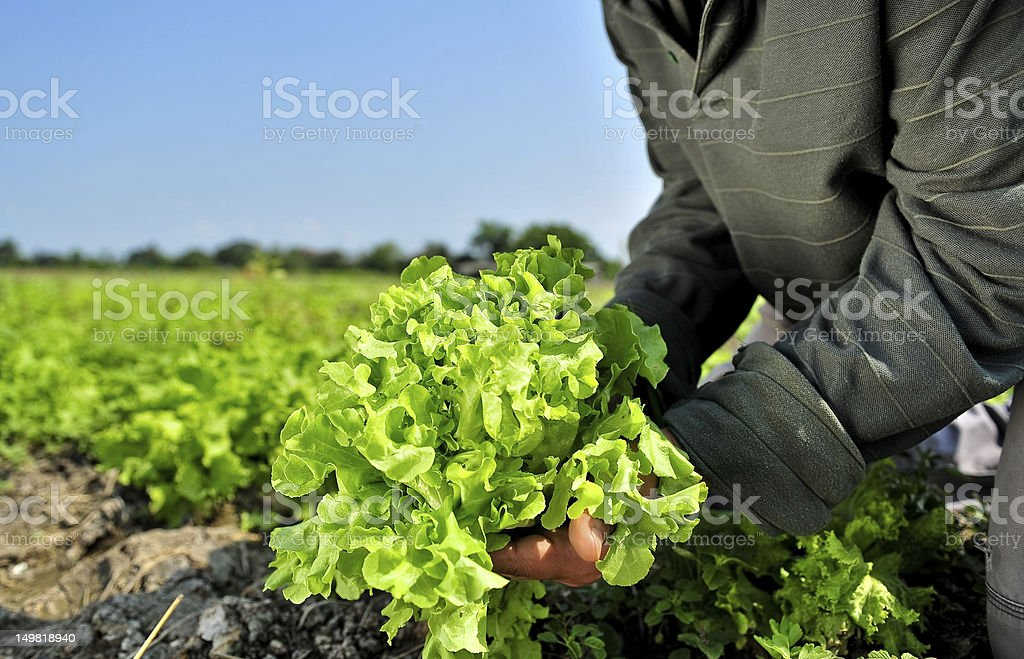 Gardener in a green royalty-free stock photo