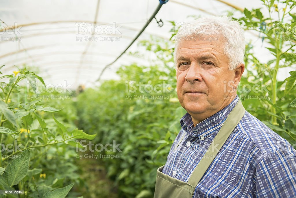 Gardener in greenhouse royalty-free stock photo
