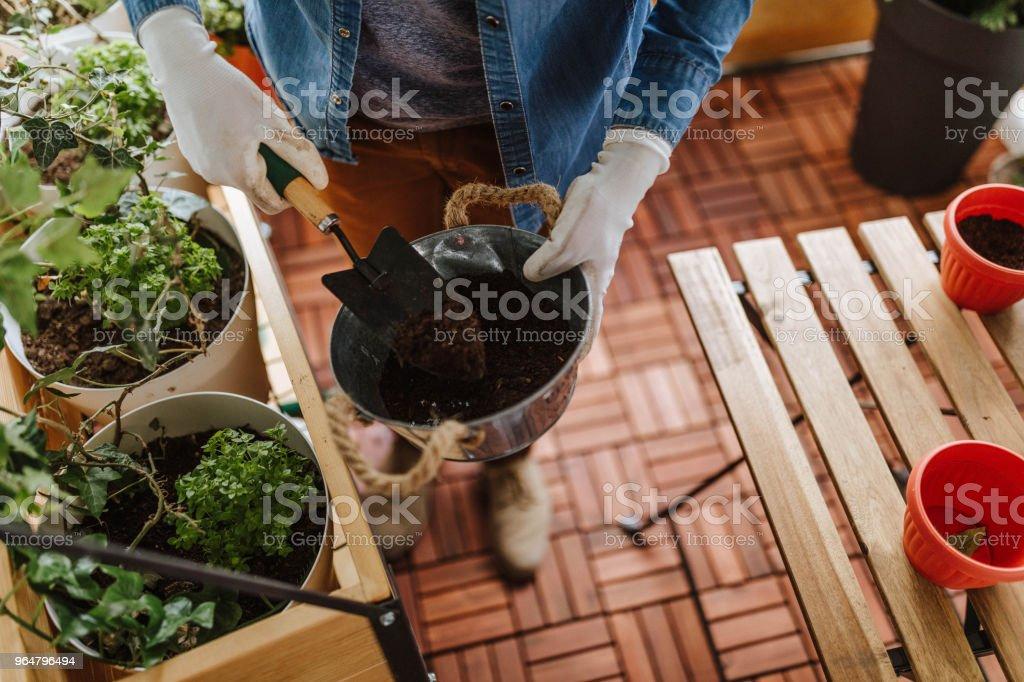 Gardener in his garden royalty-free stock photo