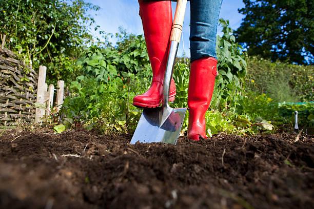 gardener in red boots with spade in garden - 鏟 個照片及圖片檔
