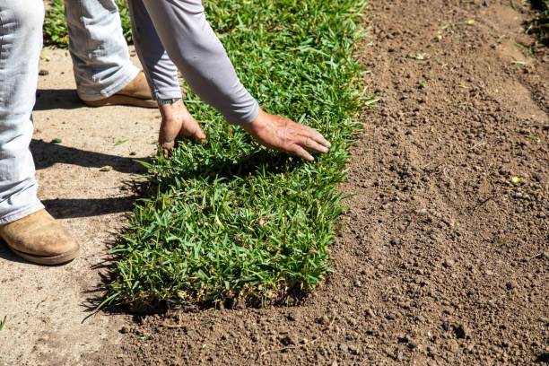 Gardener installing natural grass turf, professional installing beautiful new sod l stock photo