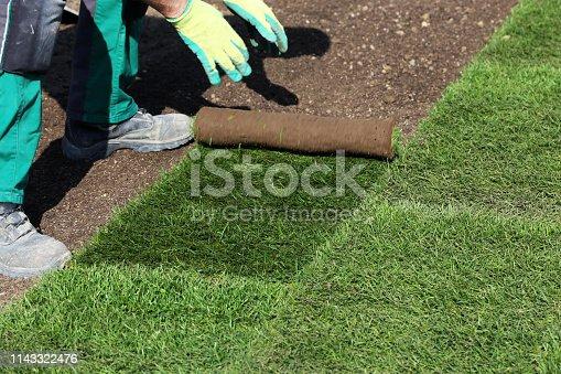 Gardener laying rolled turf
