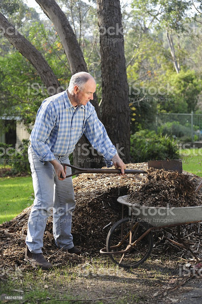 Gardener Mulching Garden royalty-free stock photo
