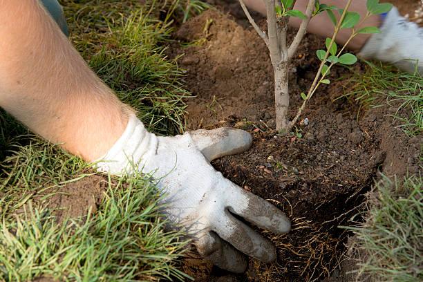 giardiniere - piantare foto e immagini stock