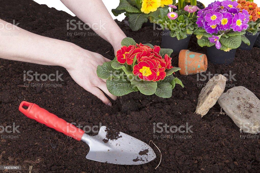 gardener  planting flowers royalty-free stock photo