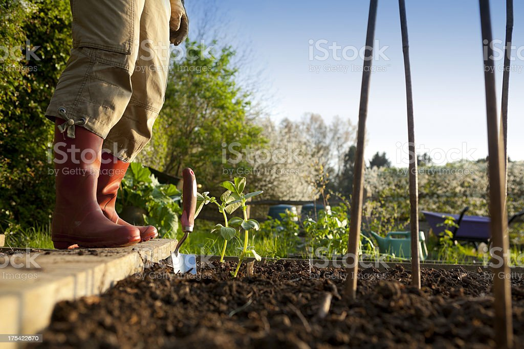 Gardener Planting in Vegetable Garden stock photo