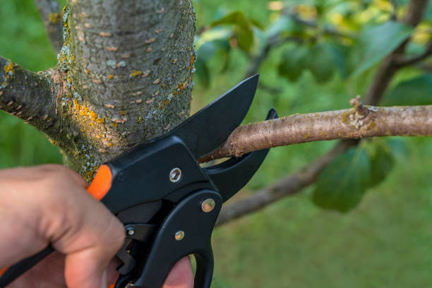 gardener pruns the fruit trees by pruner shears. farmer hand with garden secateurs on natural green background. - cutter stock pictures, royalty-free photos & images