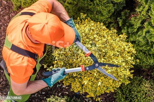 Gardener Shaping Plants Using Heavy Duty Garden Scissors. Spring Maintenance.