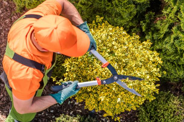 Gardener Shaping Plants Gardener Shaping Plants Using Heavy Duty Garden Scissors. Spring Maintenance. landscaped stock pictures, royalty-free photos & images