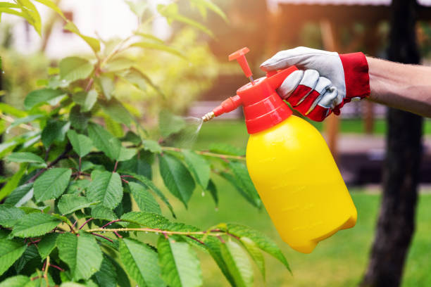 gardener spraying cherry tree against pests and diseases gardener spraying cherry tree against pests and diseases pest stock pictures, royalty-free photos & images