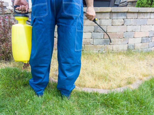 Gardener spraying grass with weed killer stock photo