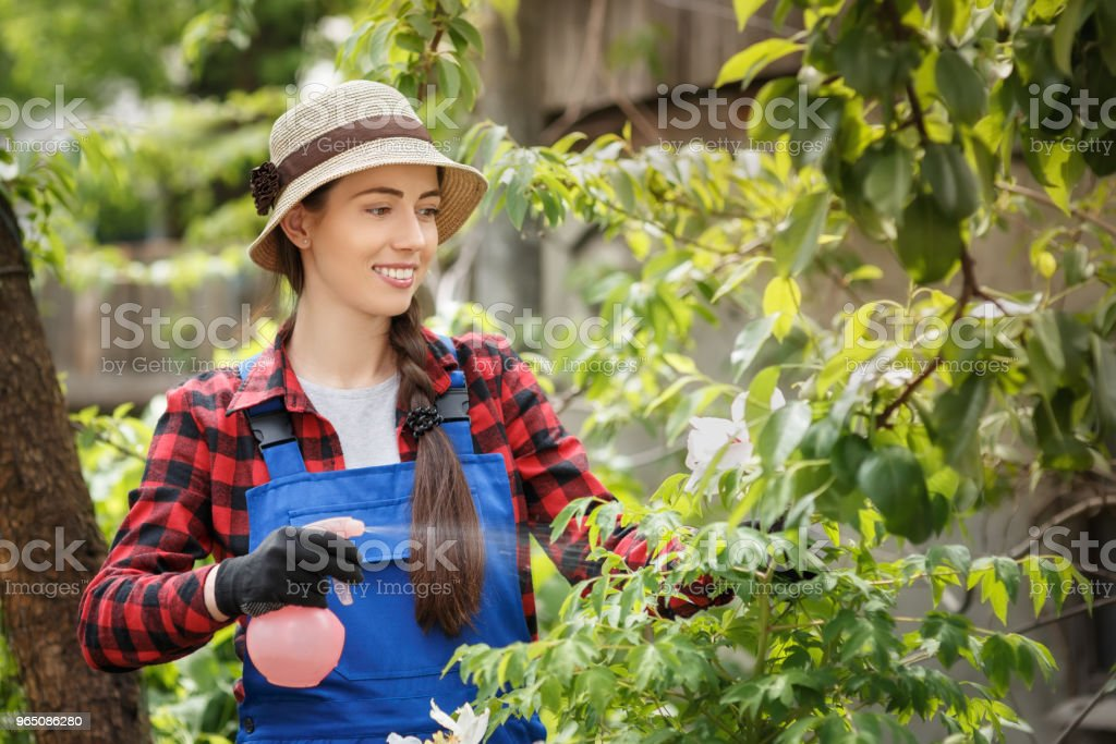 gardener spraying pesticide or water on flowers royalty-free stock photo