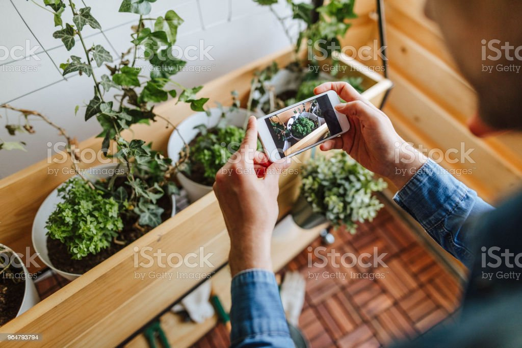 Gardener takes photo in his garden royalty-free stock photo