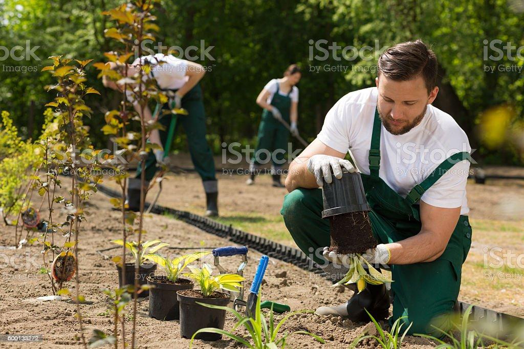 Gardener  taking the flower from the pot stock photo