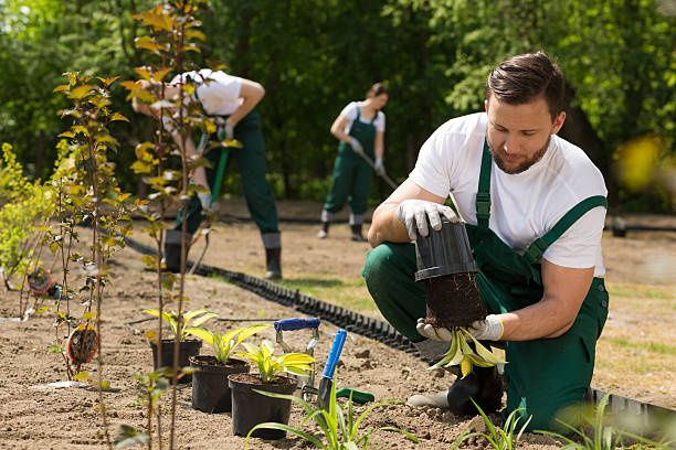 Gardener  taking the flower from the pot - foto de stock